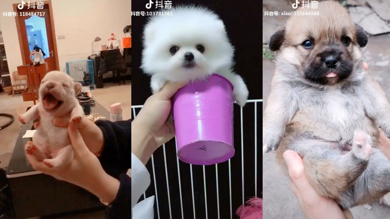 Cute Dog Videos Cute And Funny Dog Moments Compilation 4 Dogs