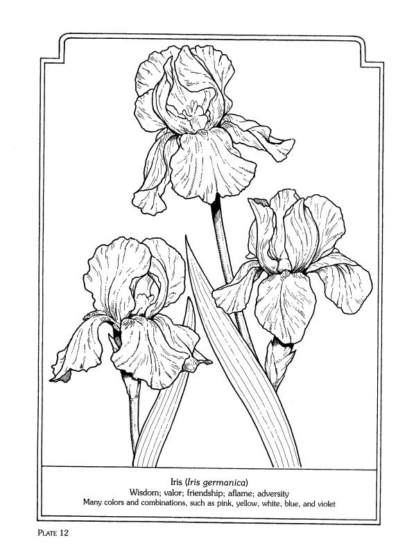 The Language Of Flowers Coloring Book Flower Coloring Pages Coloring Books Flower Drawing