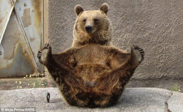 bear - Google zoeken