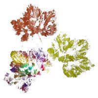 Drucktechnik für Blätter