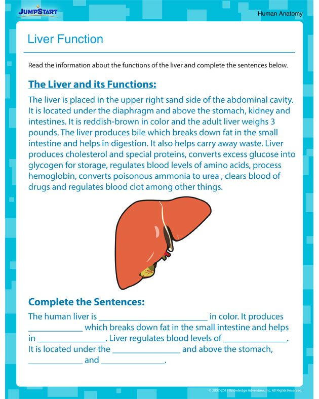 Liver Function Printable Science Worksheet For Fifth Grade Busy
