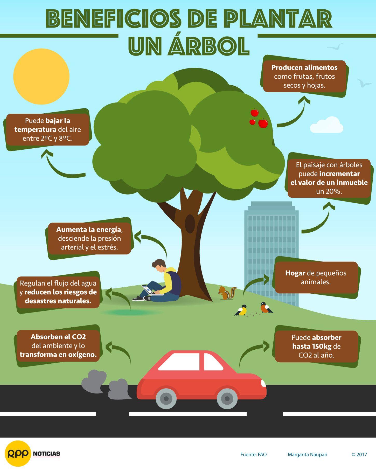 Beneficios De Plantar Un Arbol Conservacion Del Ambiente