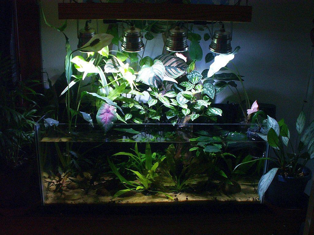 Led Diy Aquascape - Aquascape Ideas