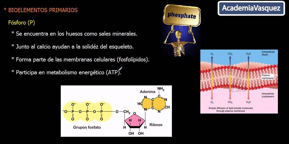 PURIFICACION DE AIRE AIRLIFE te dice El Policloruro de bifenilo (PCB - fresh grupos de la tabla periodica unam