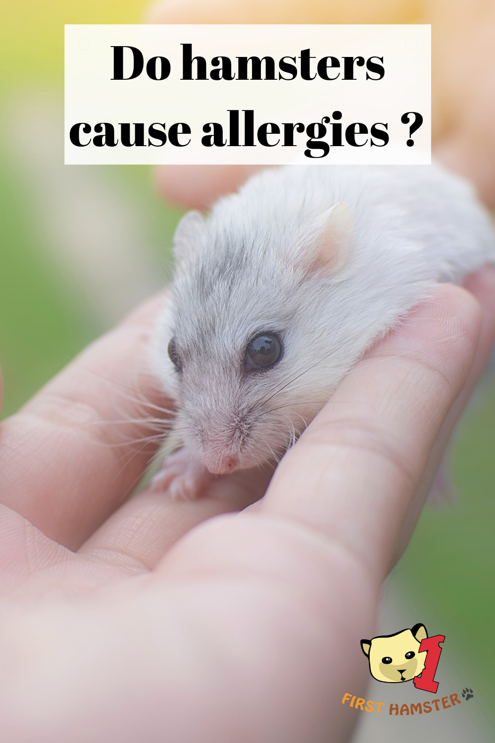 Do Hamsters Cause Allergies ? How Hamsters Affect Your Health