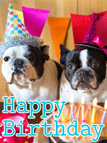 Two Birthday Dogs Animal Birthday Card Happy Birthday