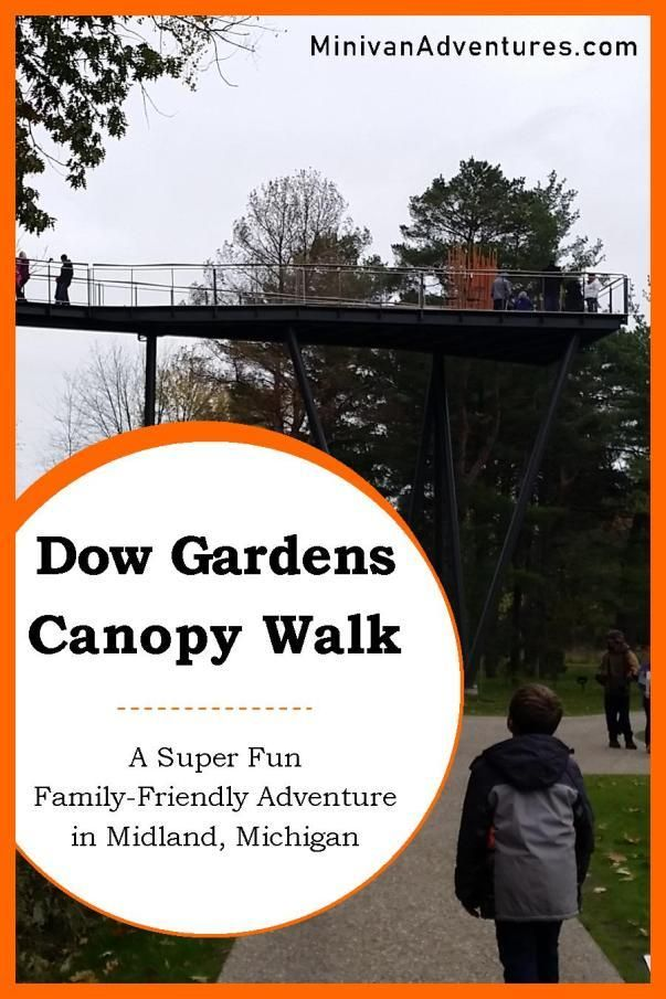 Experience the Nation's Longest Canopy Walk at Dow