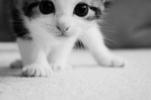 Kitttyyyyy!!!