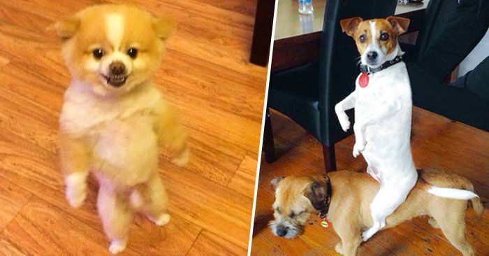 Photo of 25 Dogs that are rare, VERY RARE but adorable: v