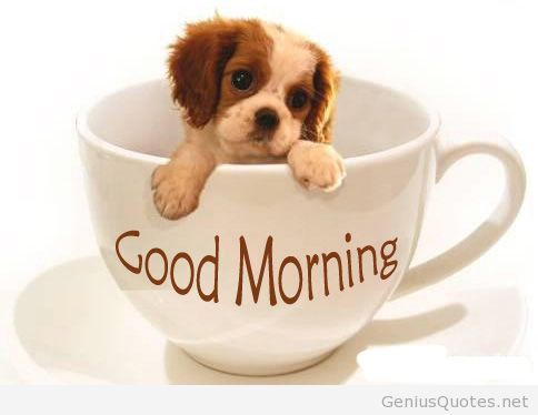 Funny cute good morning pic coffee and dog.