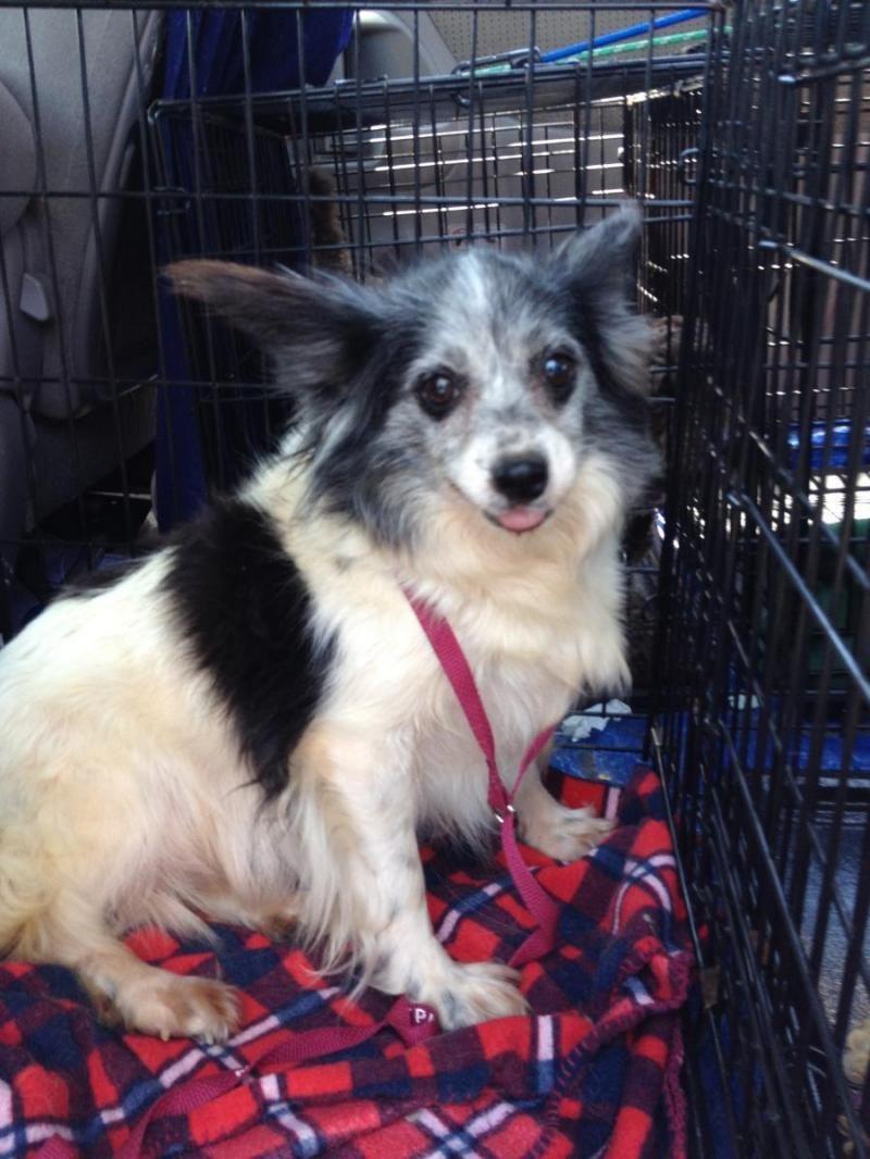 Adopt Weeble On Dog Adoption Dog Friends Pets