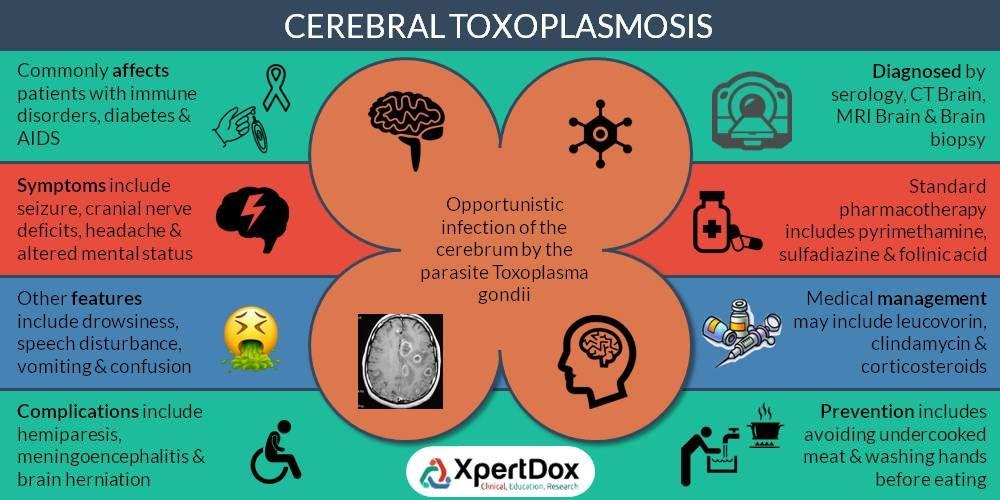 Cerebral toxoplasmosis, also known as neurotoxoplasmosis ...