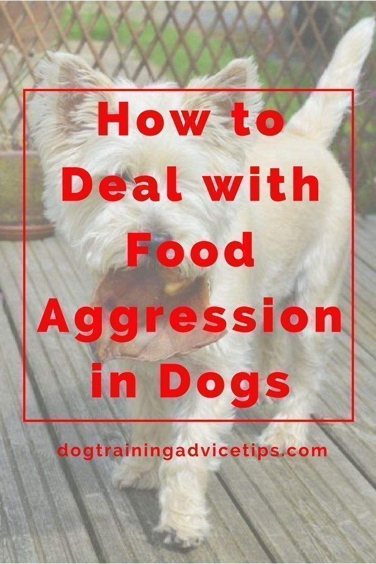 Dealing with food aggression in dogs dog training advice