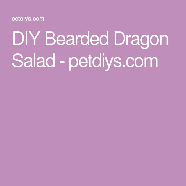 DIY Bearded Dragon Salad - Petdiys.com