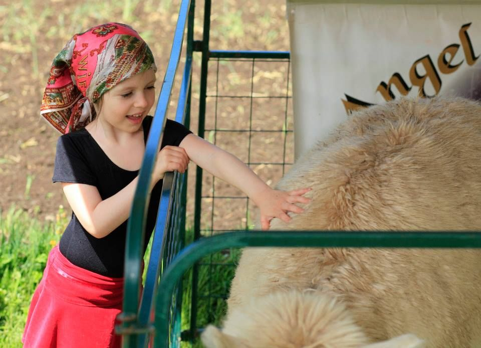 While you are with us, be sure to stop by the #AngelHairAlpacas tent to to pet the Alpacas!