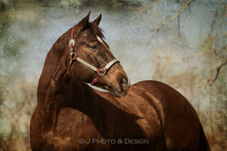 Horse portraits.  This is Jag