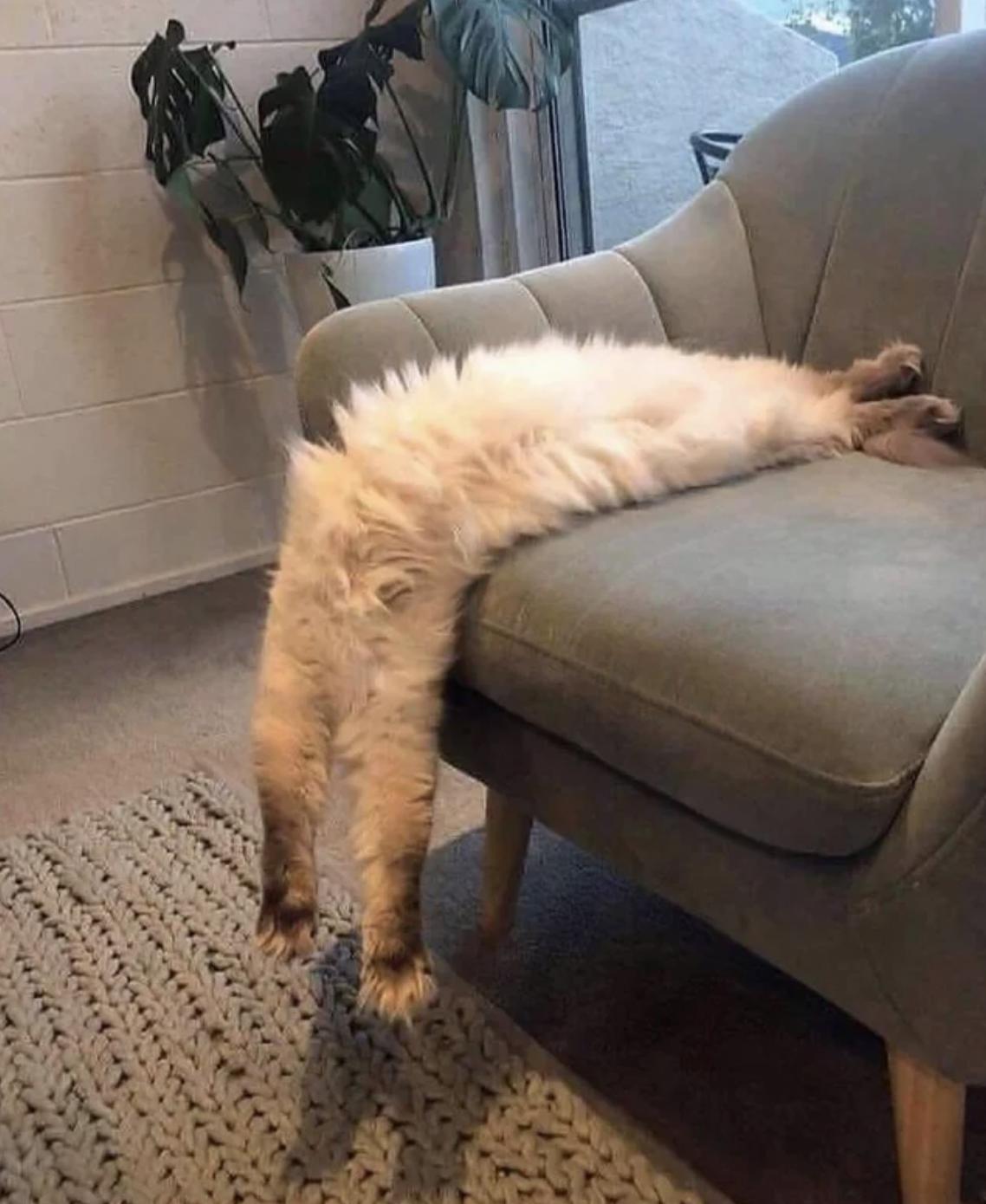 Diese Katze ist ziemlich flexibel: