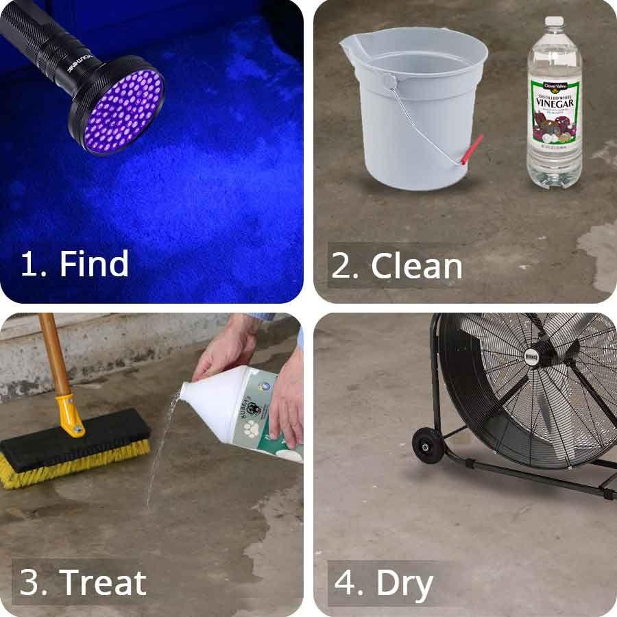 Get Pet Urine Off Concrete Remove Dog