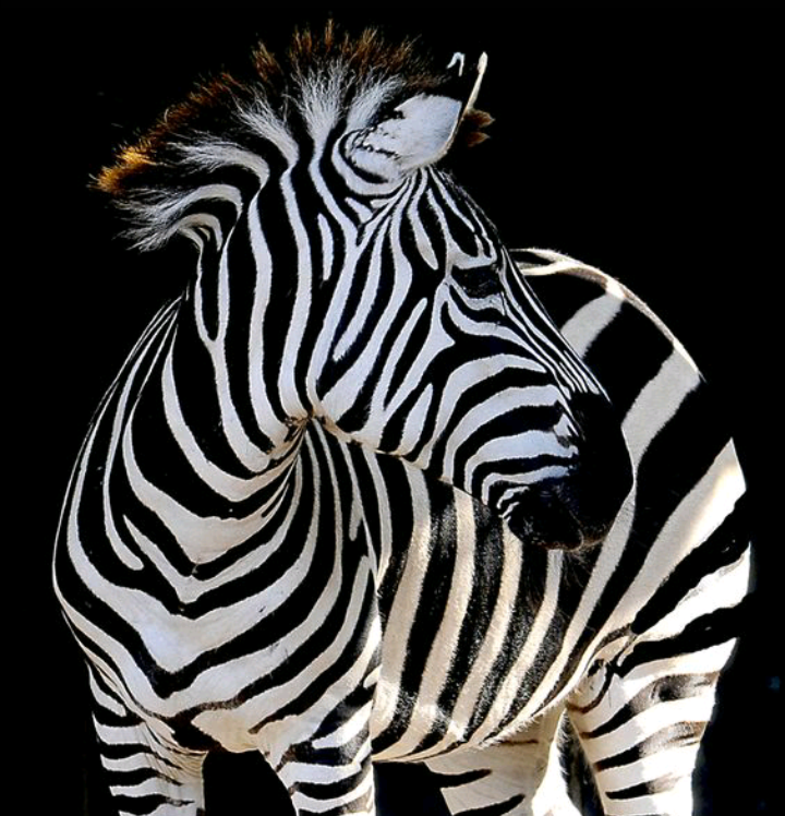 Vivid black and white. Julianne McPeters no pin limits ...