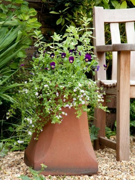 Choosing Types of Mint for Containers   FLORAL   Mint plants