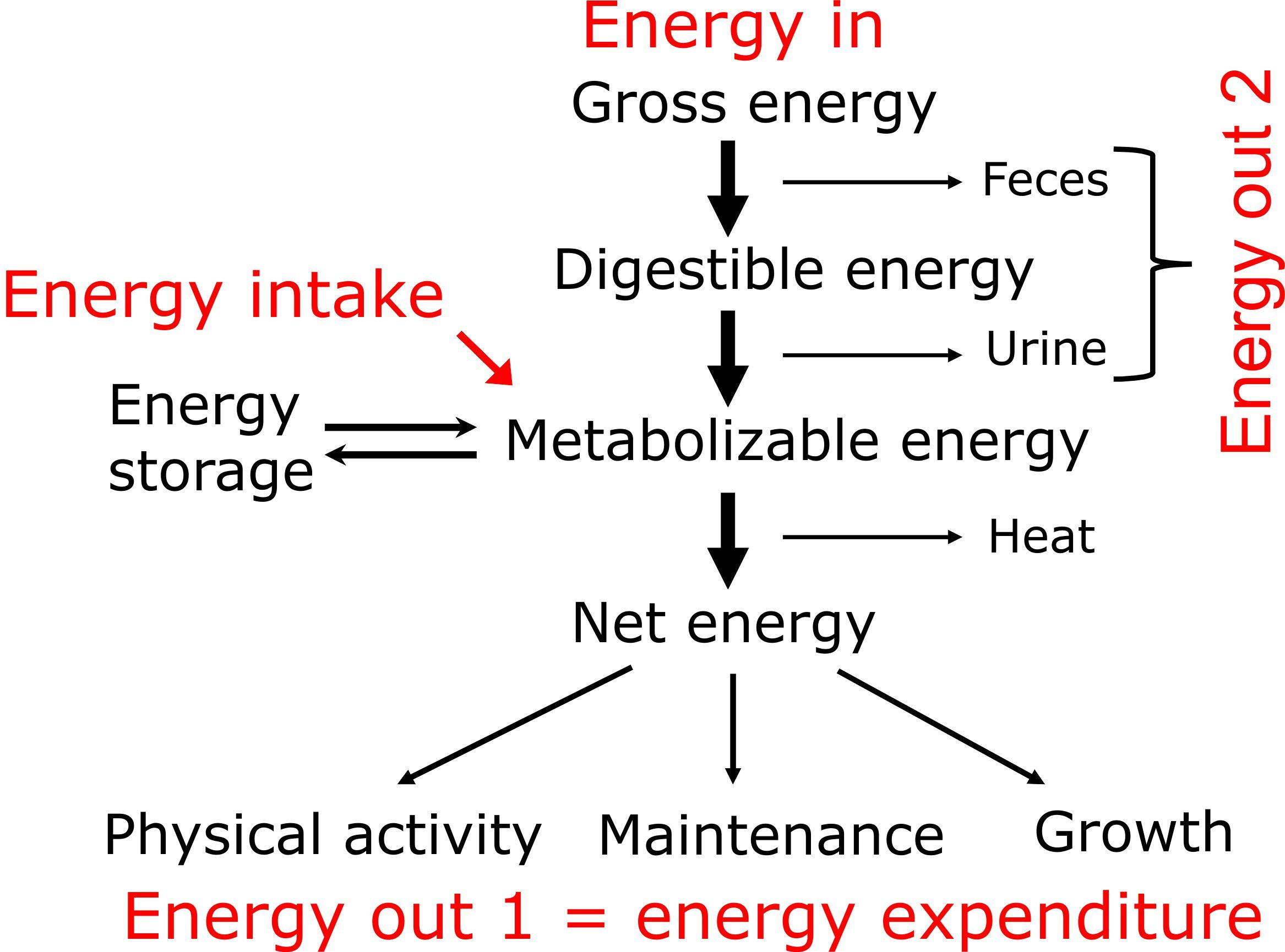 752 Flow Chart Of Energy 75 Energy Expenditure Nutr101x