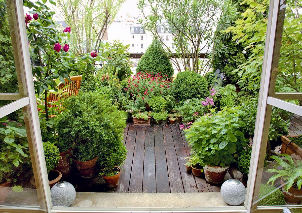 Combinaci n de plantas de hoja perenne herb ceas y for Plantas de balcon para todo el ano