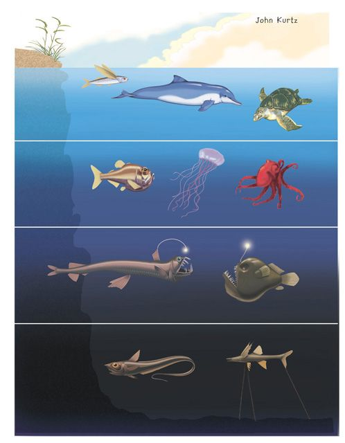 Images Animals of the Ocean Zones | Education | Pinterest | Ocean ...