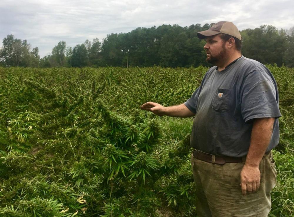 This farmer had a milliondollar hemp crop — until South