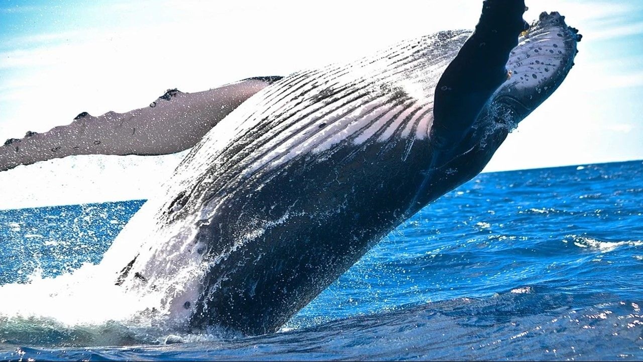 Pin By Know More On إقرأ بالعربي In 2020 Whale Pictures Whale Humpback Whale