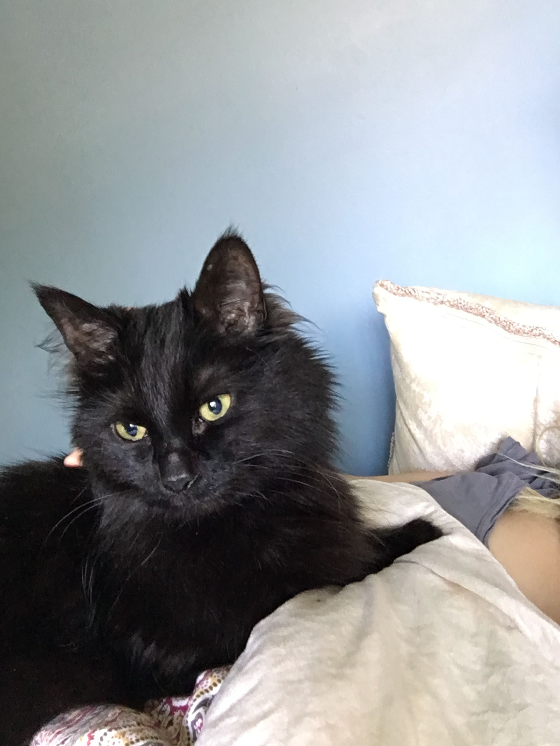 Montreal Charlie Is Looking For A Forever Home 3 Viisit Www Facebook Com Cause4paws For Details And Share Widely Contact M Black Cat Group Board