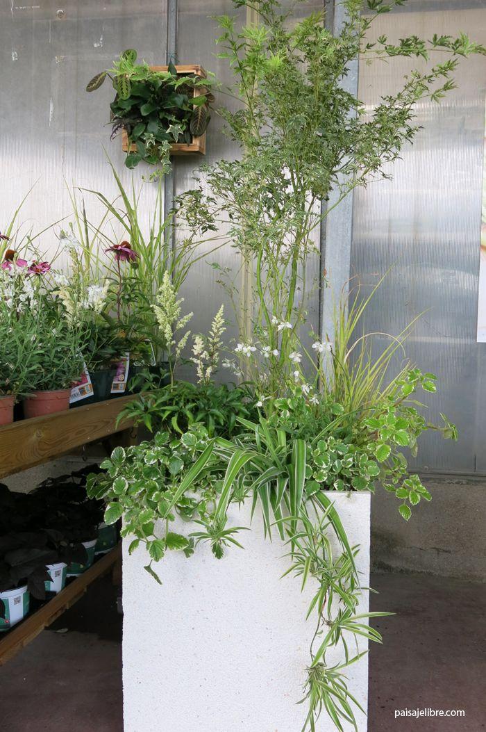 Paisaje libre ideas y composiciones de plantas para - Plantas para jardineras ...