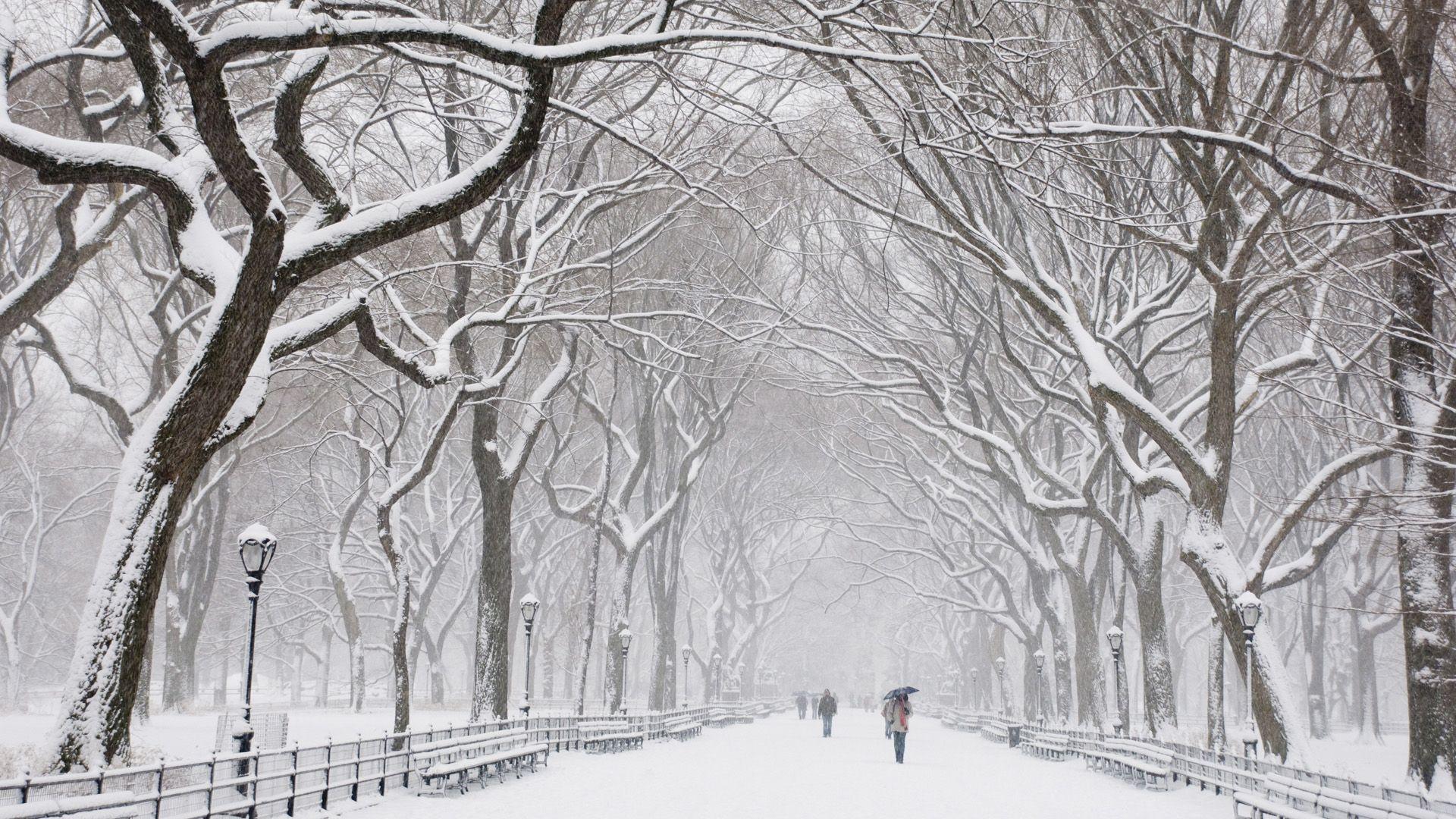 Snow Covered Trees Central Park New York Tempete De Neige Neige Fond D Ecran Telephone
