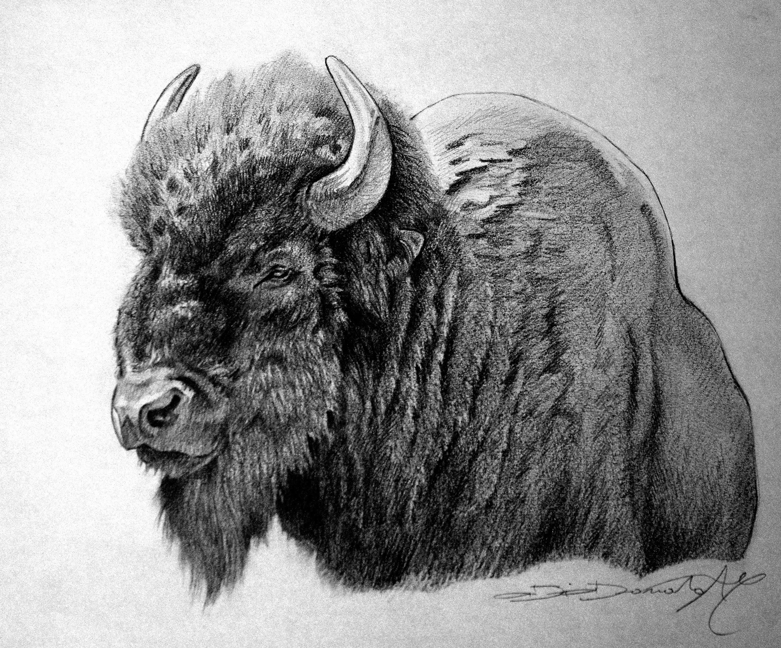 It is a graphic of Dashing Drawing Of A Buffalo
