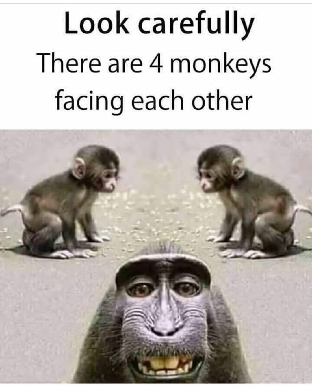 4 Monkeys Images : monkeys, images, Funny, Monkeys, Funny,, Quotes, Kids,