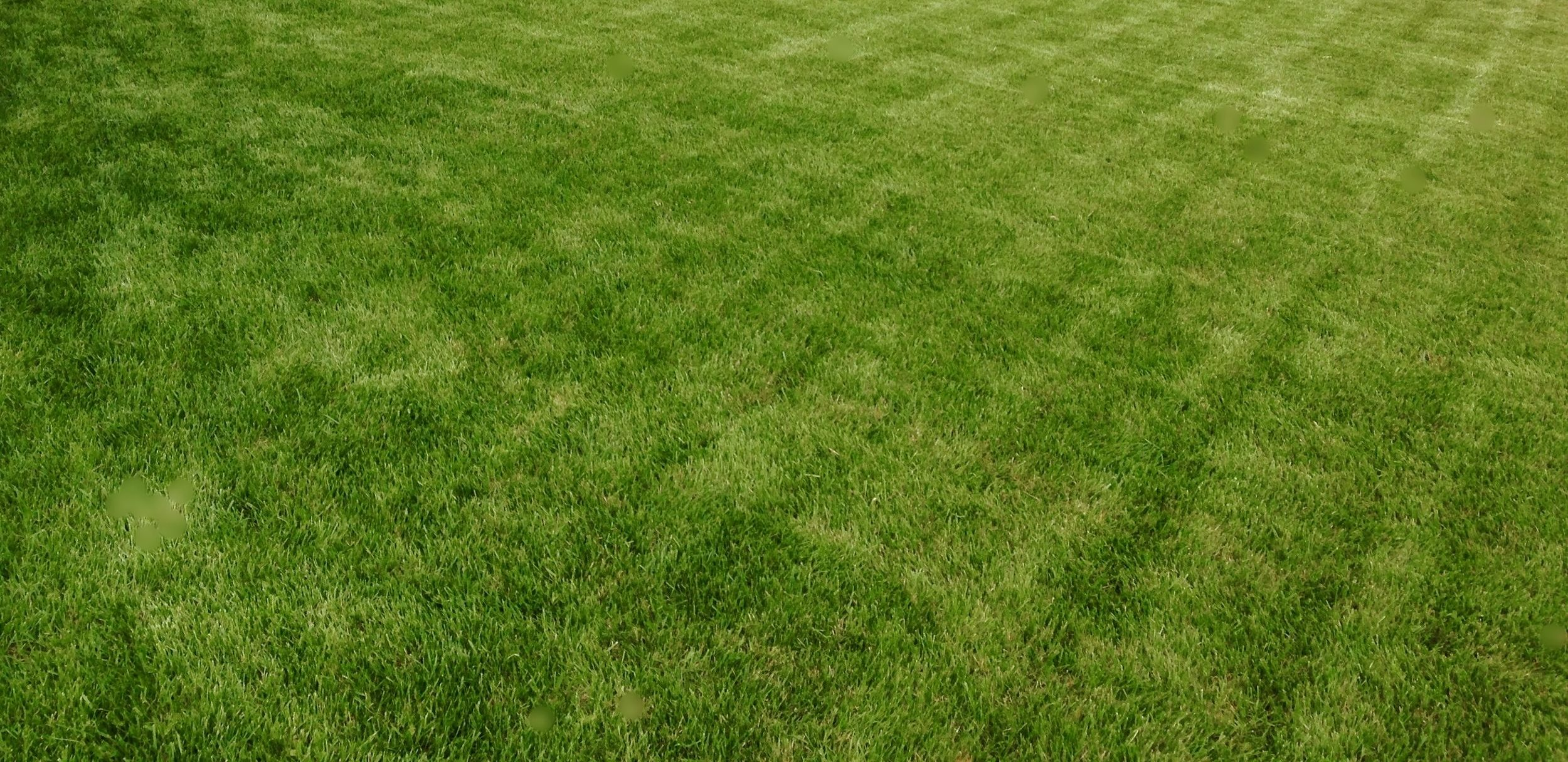 Our Products Make Your Lawn Look The Best It Ever Has