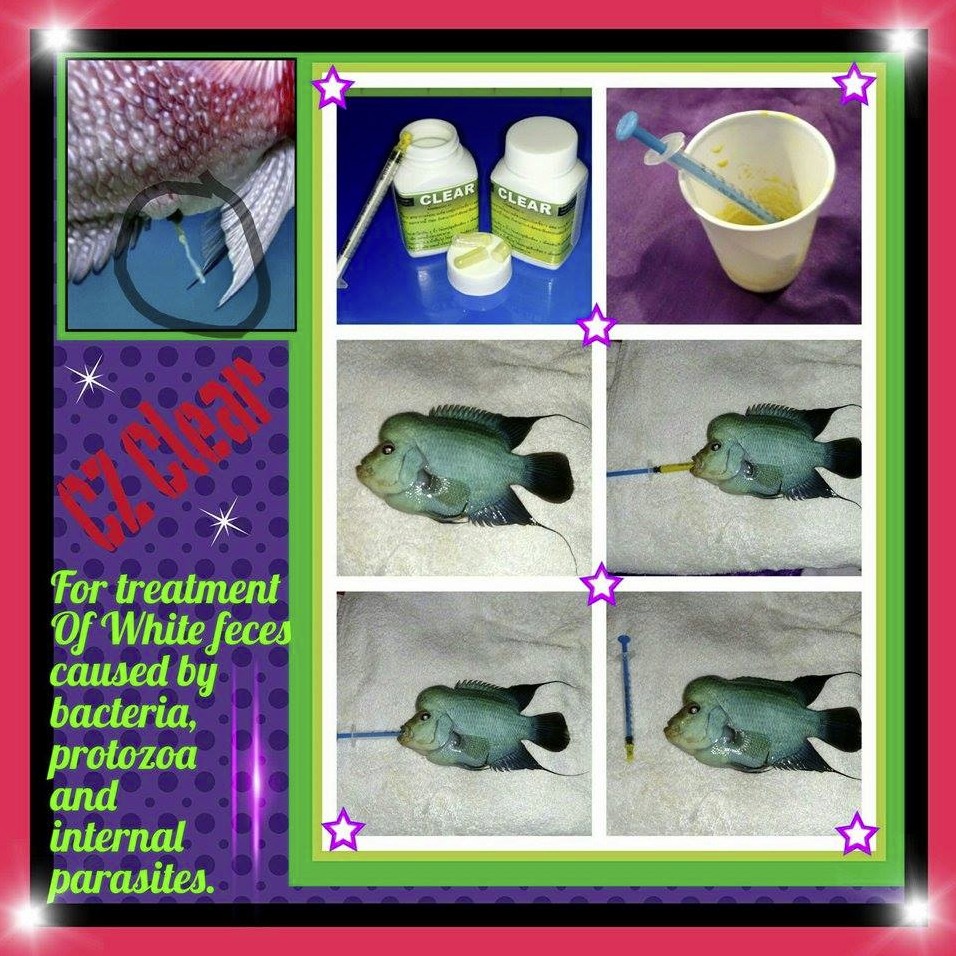 Freshwater aquarium fish internal parasites - Fish Treating Hexamita Freshwater Aquarium Fisheducation