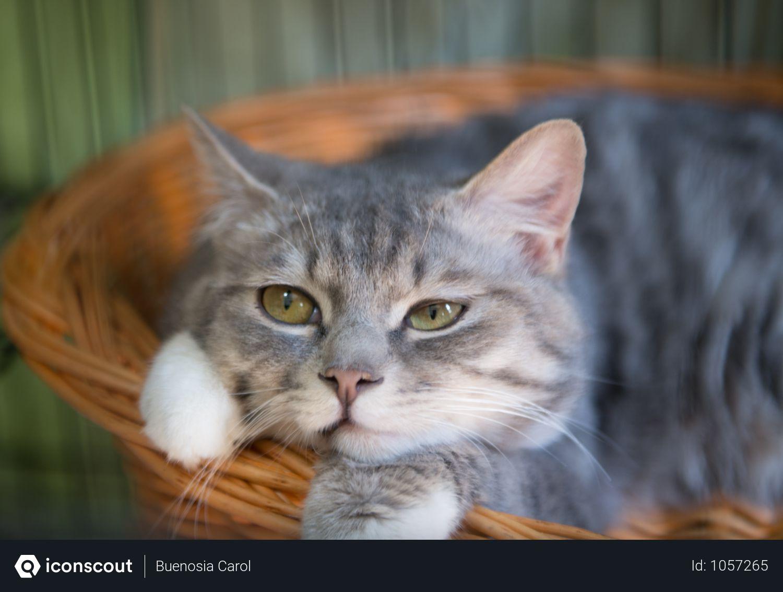 Animalwallpaper Animalyoudidn Tknowexisted Cutestbabyanimals Farmanimals Wildanimals In 2020 Baby Cats Cute Baby Animals Cute Animals
