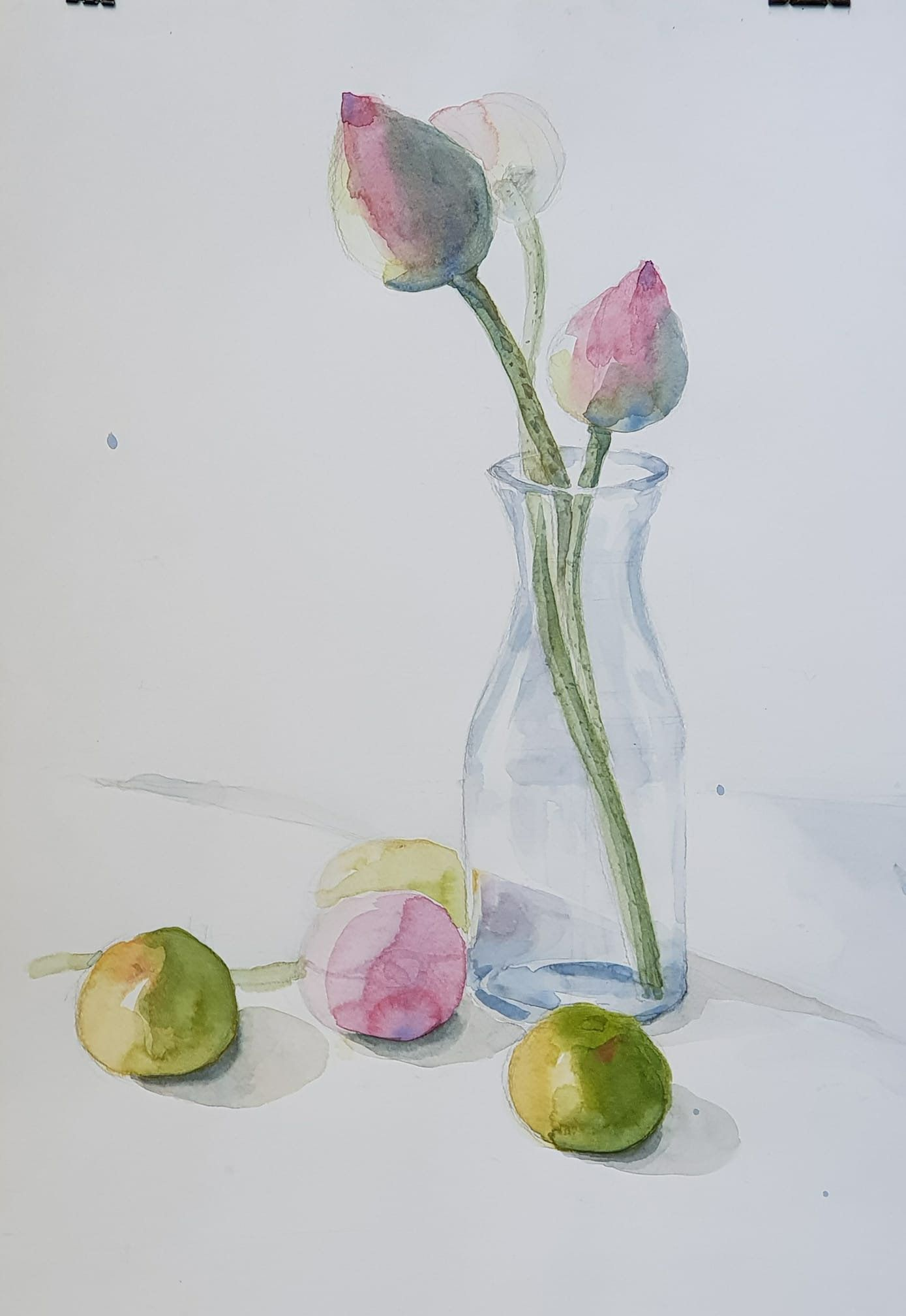 Still Life Of Lotus And Oranges Original Watercolour Painting