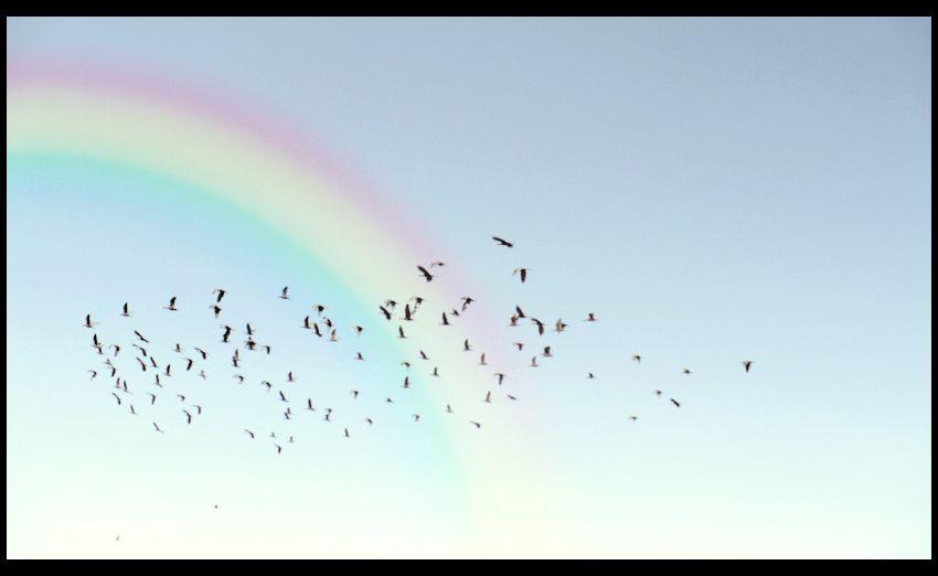 blue bird fly over the rainbow - Cerca con Google