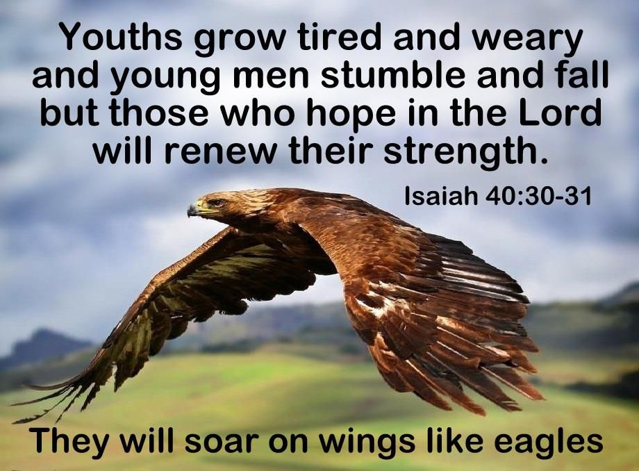 Isaiah 40 : 30,31 Bible Verse Picture   Eagle images ...