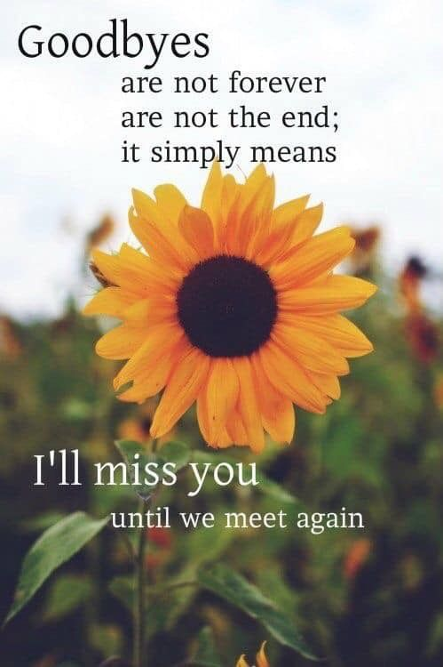 Pin by ⊱ Carolyn Erwin ⊱ on Mom & Dad   Sunflower quotes ...