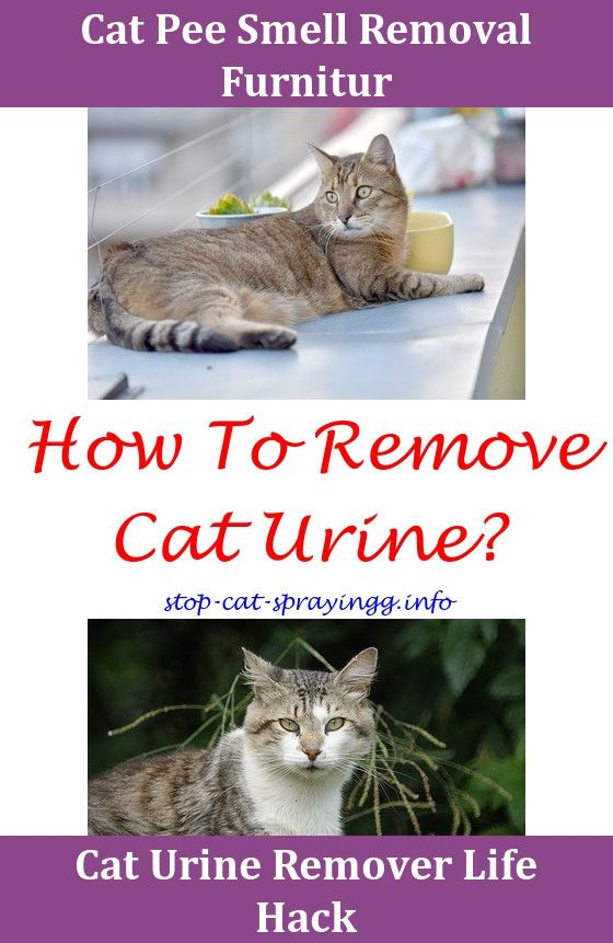 Cat Training What Removes Cat Urine Smell,cat Peeing On Furniture.Repellent  For Cats Urinating Male Cat Spraying My Name Cat Peeing Products Cat Uru2026 ...