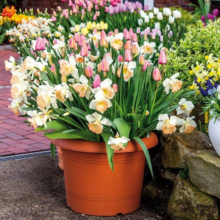Marvelous Interessante Blumenzwiebel Mischung in Pastellfarben f r die Etagen Bepflanzung Gefunden auf