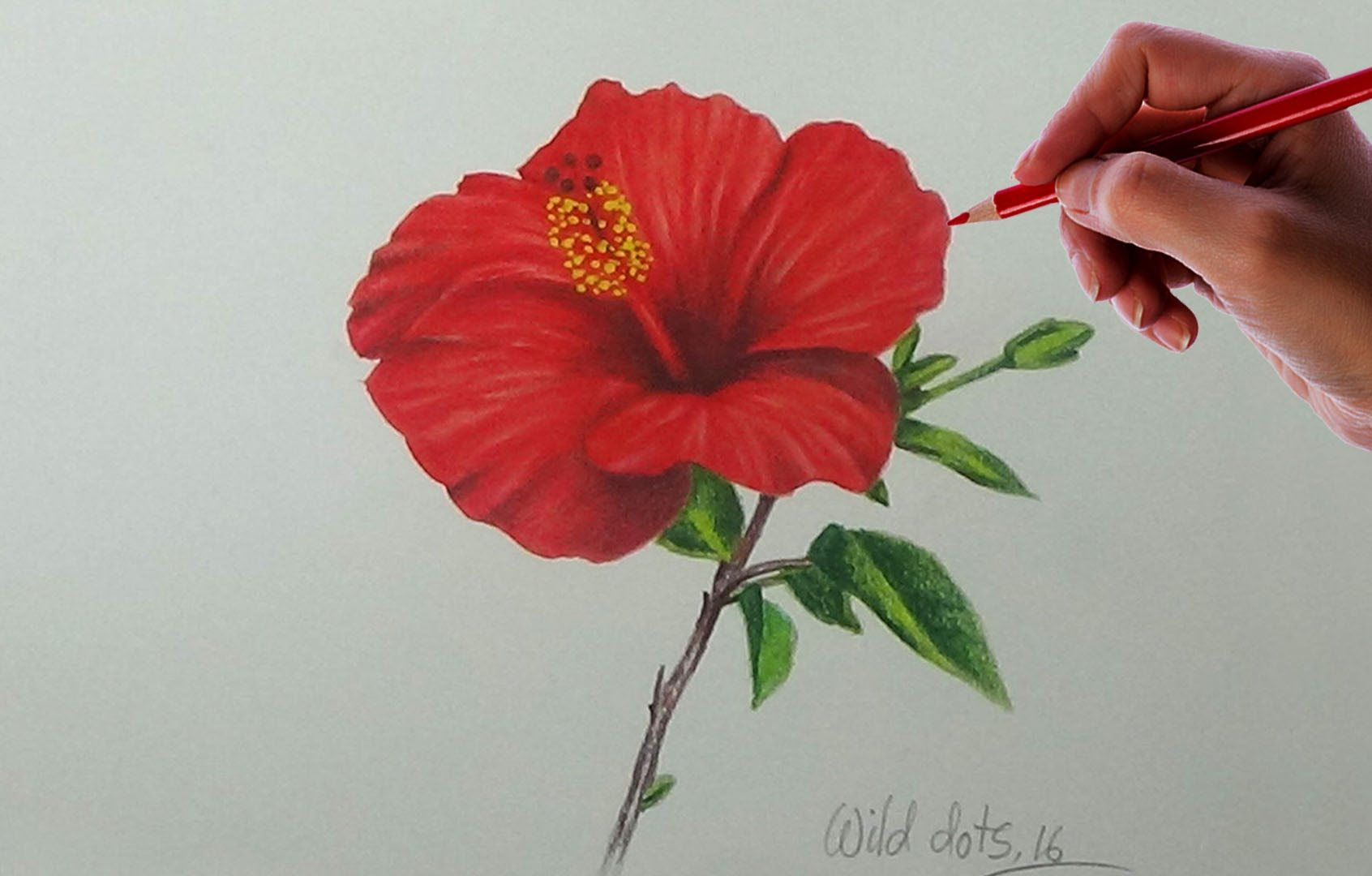 Drawing A Flower China Rose Easy And Simple Way Kurukalem