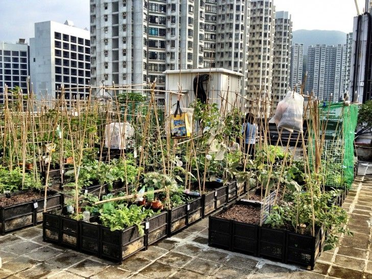 Gardens, Outstanding Ideas How To Make A Rooftop Garden: How to Make Urban Rooftop Gardens