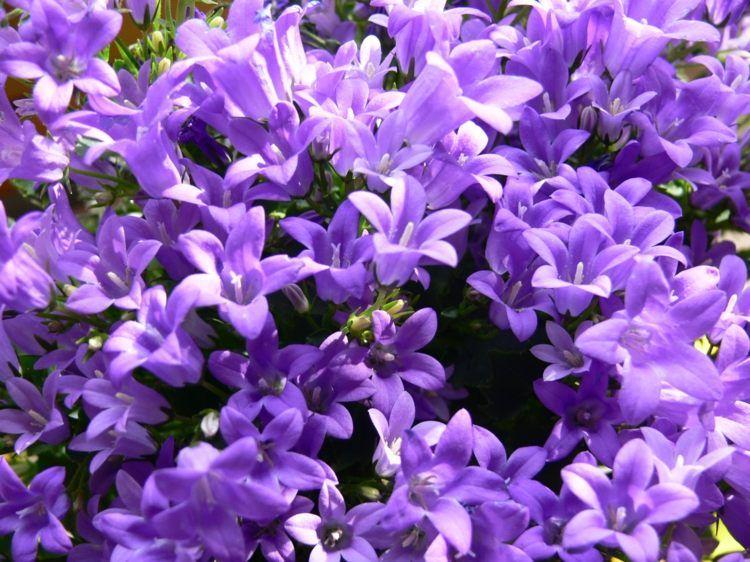 hängepflanzen für blumenampeln - 10 ampelpflanzen ideen | diverses, Gartenbeit
