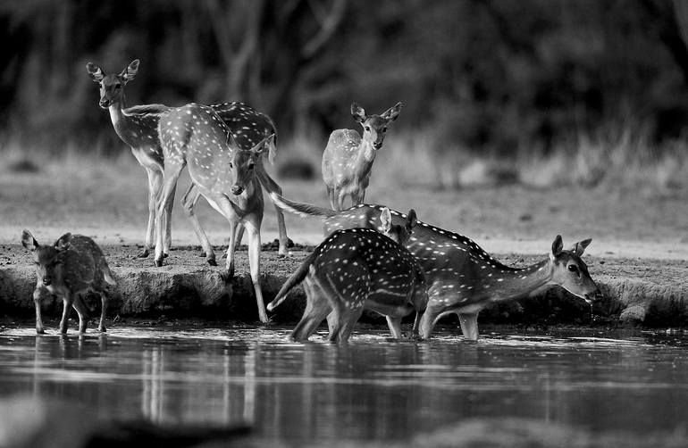 Photo of Original Animal Photography by Leroy Dominique   Photorealism Art on Aluminum   The doe has infinite sweetness – Limited Editi