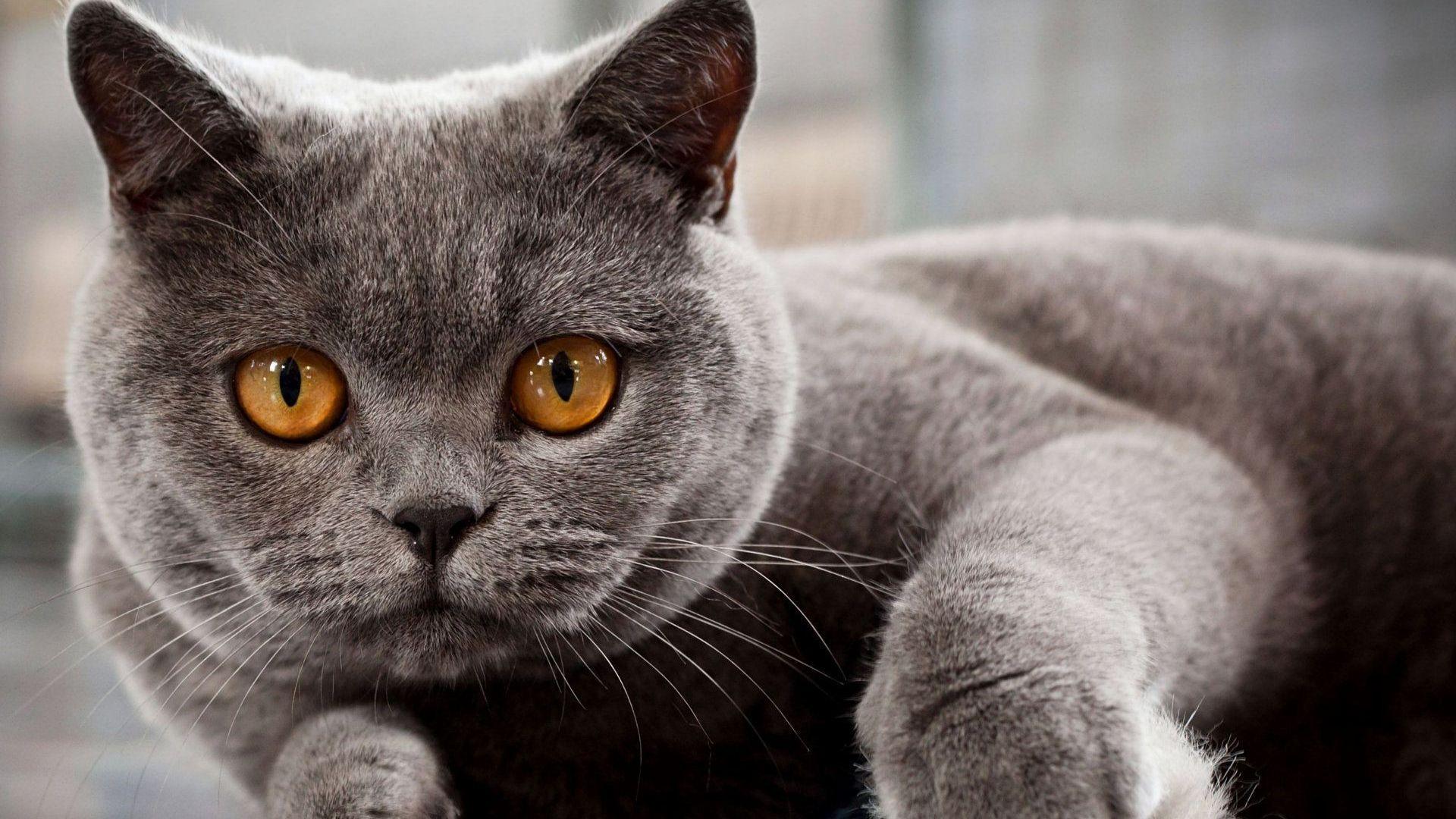 Maano waiting for Milk Best cat litter, Cat lovers