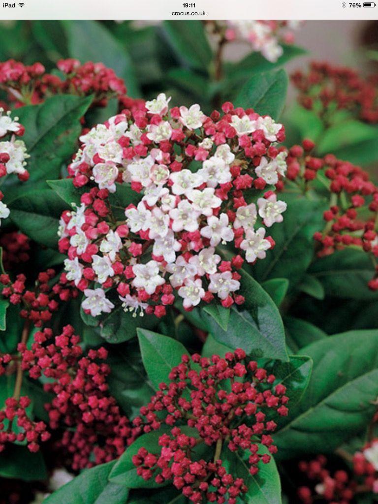 Pin von Blooming Lovely Gardens auf Declan mood board