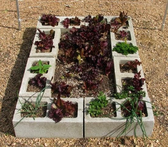 raised cinder block garden bed